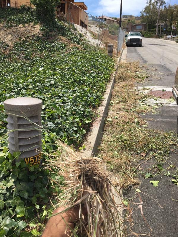 Lawn Mowing Contractor in Oxnard, CA, 93033