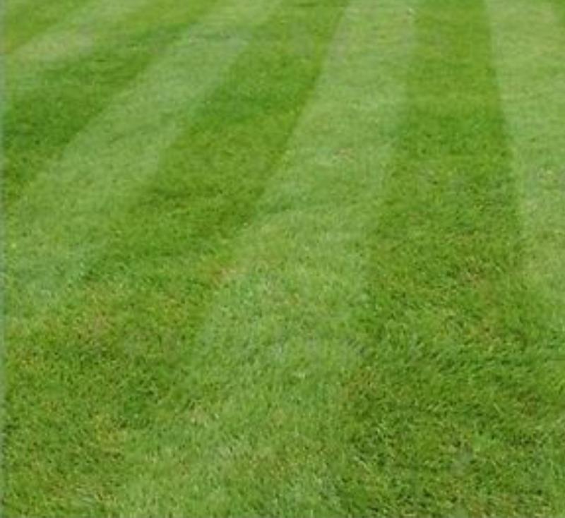 Lawn Mowing Contractor in Jackson, TN, 38301