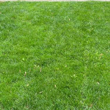 Lawn Mowing Contractor in Davenport, IA, 52806