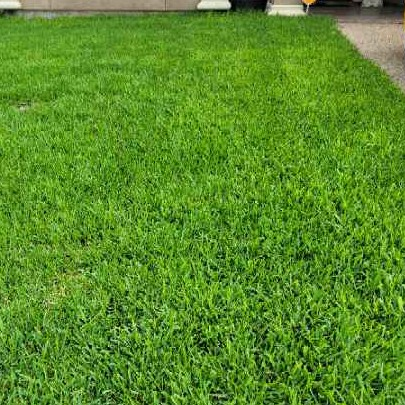 Lawn Mowing Contractor in Corpus Christi, TX, 78414