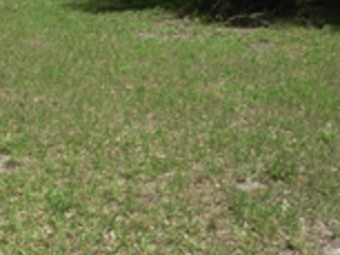 Order Lawn Care in St Petersburg, FL, 33701