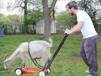 Order Lawn Care in Smyrna, TN, 37167