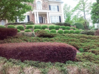 Order Lawn Care in Alpheretta, GA, 30009