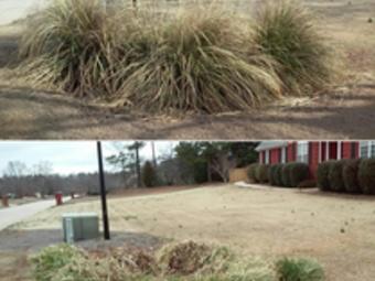 Order Lawn Care in Mcdonough , GA, 30252