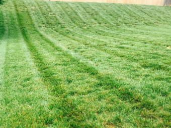 Order Lawn Care in Monroe , NC, 28112