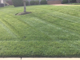 Order Lawn Care in Mt.Juliet , TN, 37122