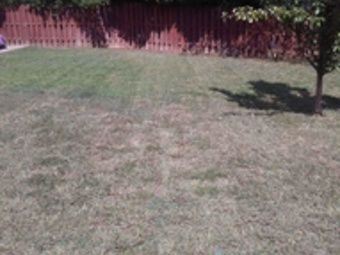 Order Lawn Care in Mount Holly, NC, 28120