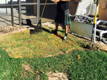 Order Lawn Care in Brandon , FL, 33511