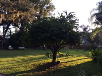 Order Lawn Care in Winter Garden, FL, 34787