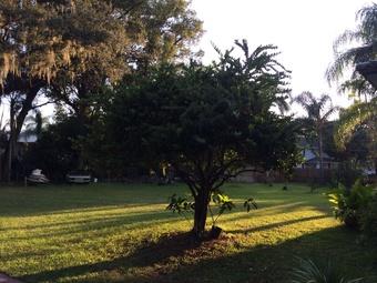 Order Lawn Care in Winter Garden, FL, 34787