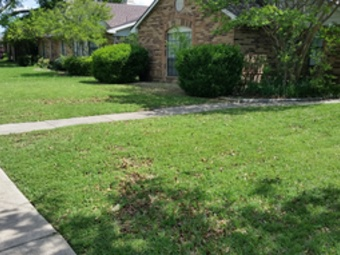 Order Lawn Care in Irving, TX, 75063