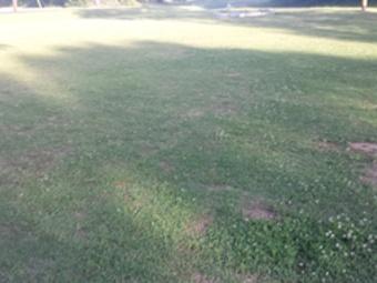 Order Lawn Care in Newnan, GA, 30263