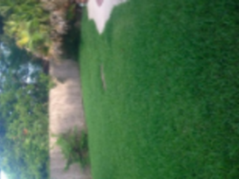Order Lawn Care in Houston, TX, 77088