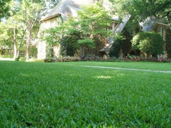 Order Lawn Care in Houston, TX, 77053