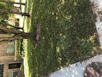 Order Lawn Care in Katy, TX, 77449