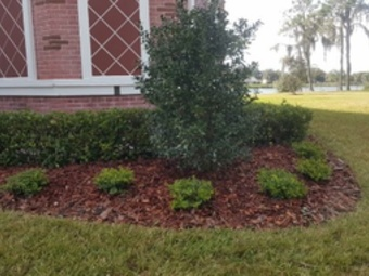 Order Lawn Care in Valrico, FL, 33594