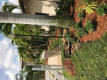 Order Lawn Care in Coral Springs , FL, 33065