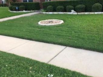 Order Lawn Care in Fort Worth, TX, 76162