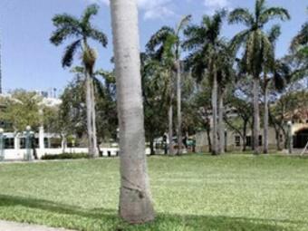 Order Lawn Care in Miami, FL, 33169