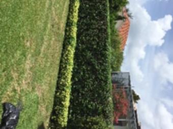 Order Lawn Care in Orlando, FL, 32827