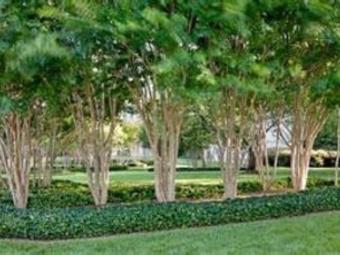 Order Lawn Care in Hoschton, GA, 30548