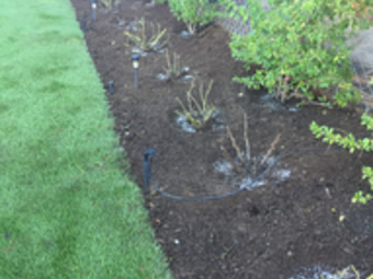 Order Lawn Care in Escondido , CA, 92026