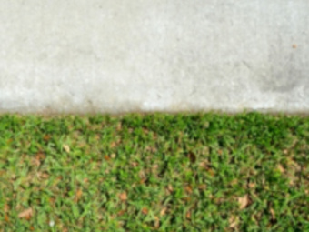 Order Lawn Care in Metairie, LA, 70005