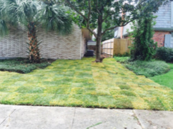 Order Lawn Care in New Orleans , LA, 70131