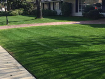 Order Lawn Care in Bakersfield, CA, 93309