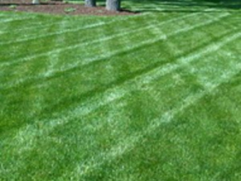 Order Lawn Care in Boca Raton, FL, 33431