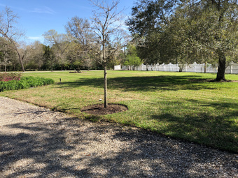 Order Lawn Care in Dickinson , TX, 77539