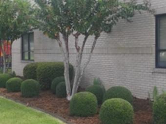 Order Lawn Care in Livton, IN, 46149