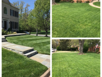 Order Lawn Care in Alexandria, VA, 22312