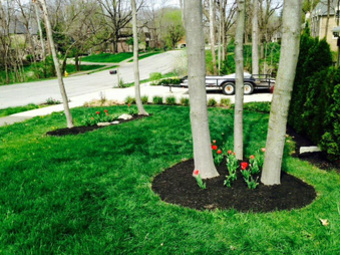 Order Lawn Care in Greenwood, IN, 46143