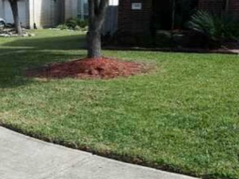 Order Lawn Care in Houston, TX, 77085