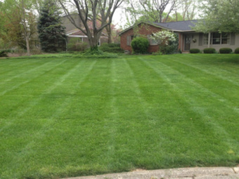 Order Lawn Care in Indianapolis , IN, 46240