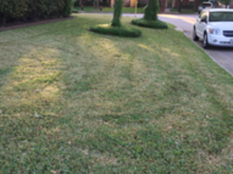 Order Lawn Care in Houston , TX, 77014