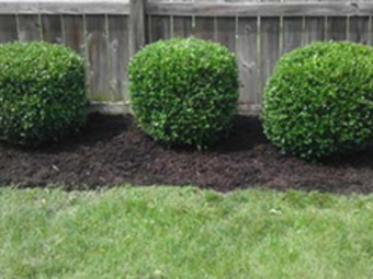 Order Lawn Care in Charlotte, NC, 28215