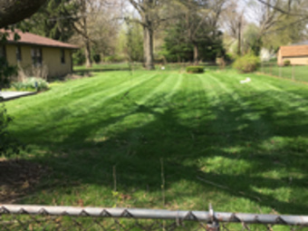 Order Lawn Care in Indianapolis , IN, 46203