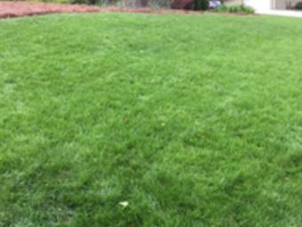 Order Lawn Care in Sugarhill, GA, 30518