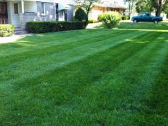 Order Lawn Care in Evansville , IN, 47714
