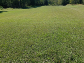 Order Lawn Care in Murfreesboro , TN, 37133
