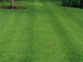 Order Lawn Care in Seminole, FL, 33777