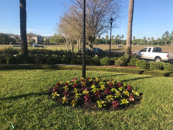Order Lawn Care in Tampa , FL, 33617