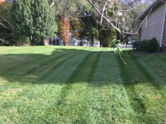 Order Lawn Care in Liberty, MO, 64068