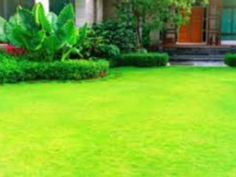Order Lawn Care in San Antonio, TX, 78245