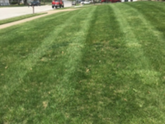 Order Lawn Care in Greenwood, MO, 64034