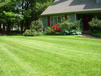 Order Lawn Care in Kansas City, MO, 64155
