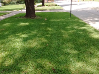 Order Lawn Care in Palmer, TX, 75152