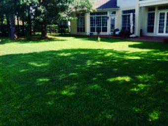 Order Lawn Care in Spring, TX, 77090